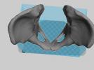 骨盘模型 3D模型 图1