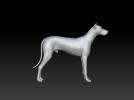 杜宾犬 3D模型 图1