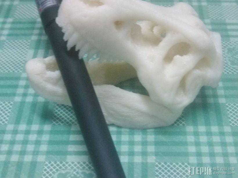 霸王龙 3D模型  图2
