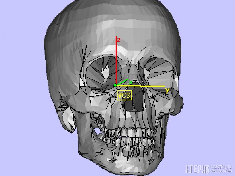 头骨 3D模型  图1