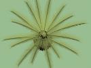 铁树 3D模型 图2