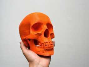 骷髅头 3D模型