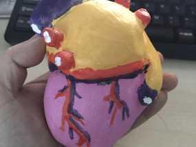 心脏教学模型涂色 3D打印制作